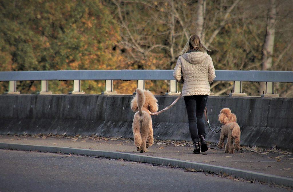 Public accidents dog walking
